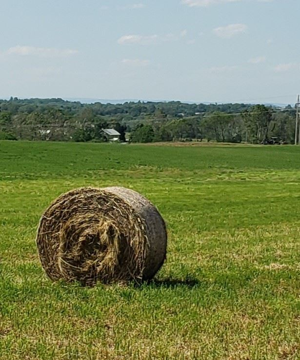 image shows a bale of hay
