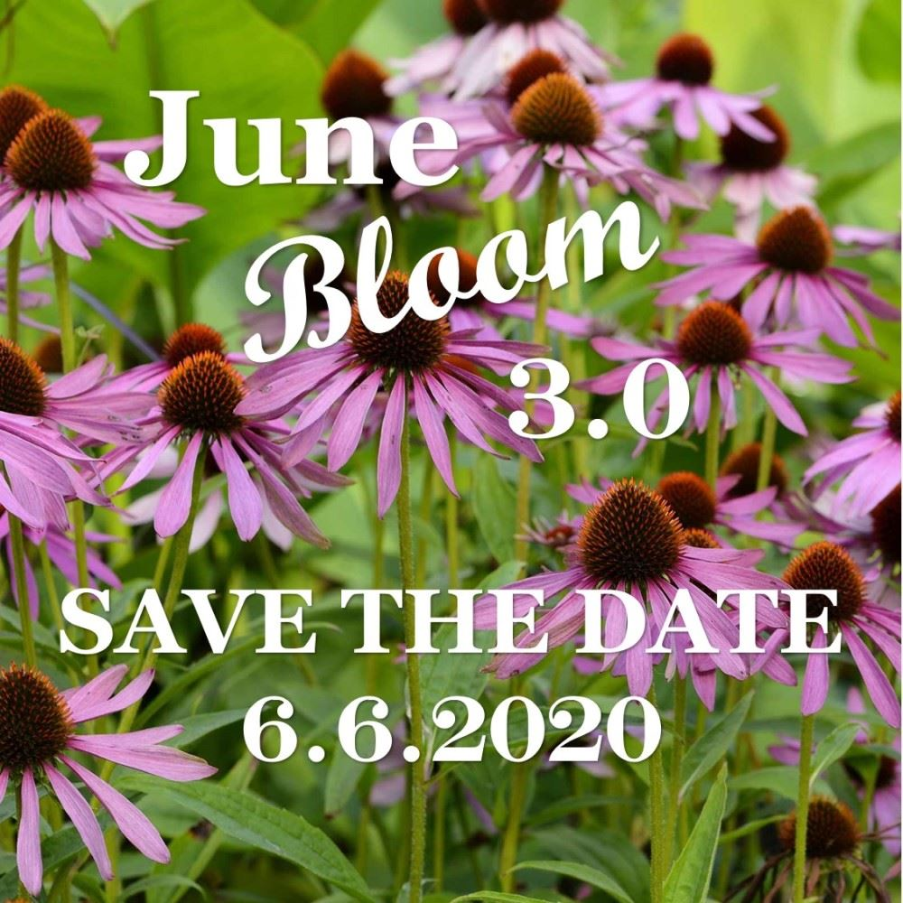 June Bloom Save the Date  Opens in new window