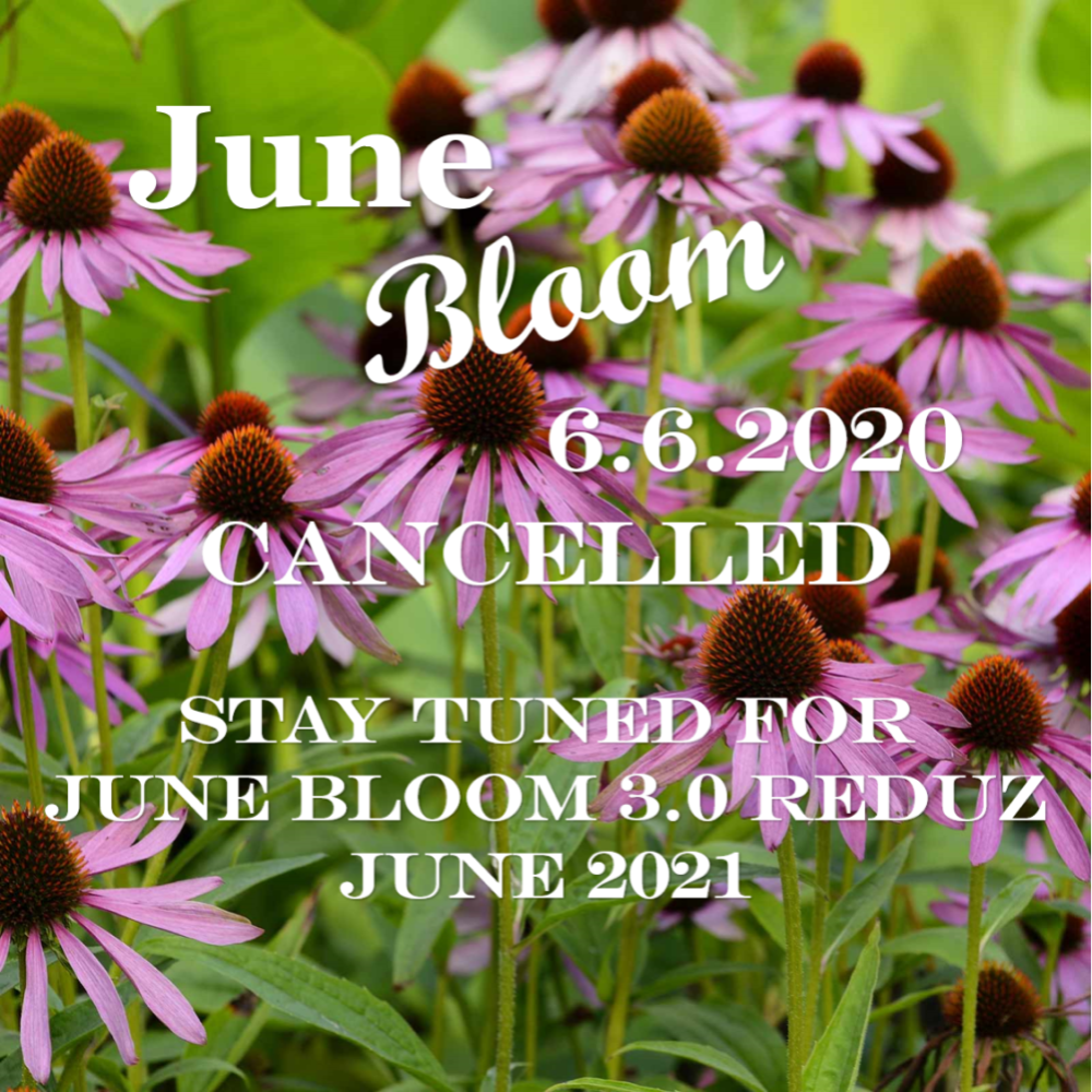 CANCELLATION OF JUNE BLOOM 3.0