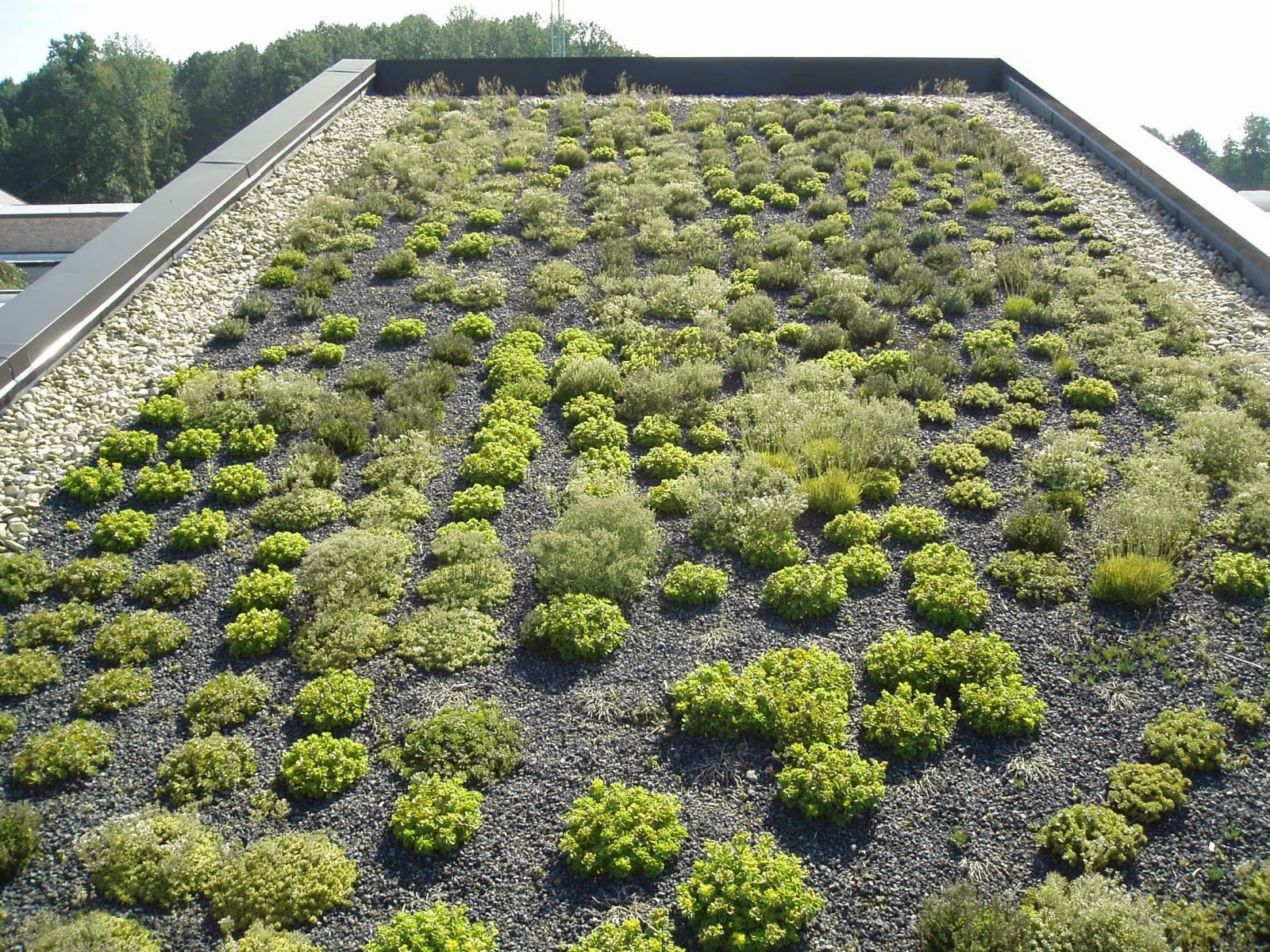 Vegetated roof at Catoctin Nature Center